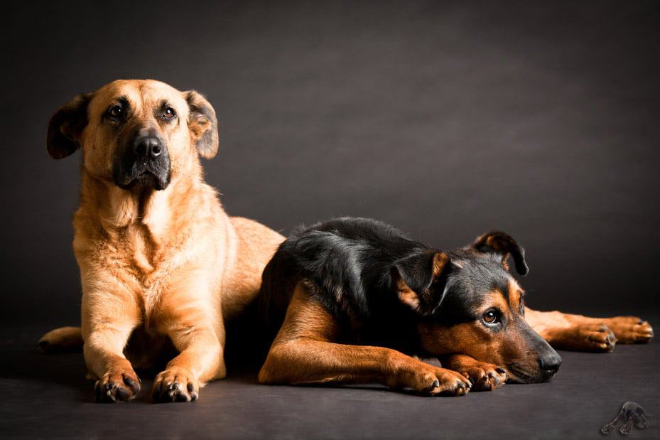 Hundebetreuung in Köln Bonn und Siegburg