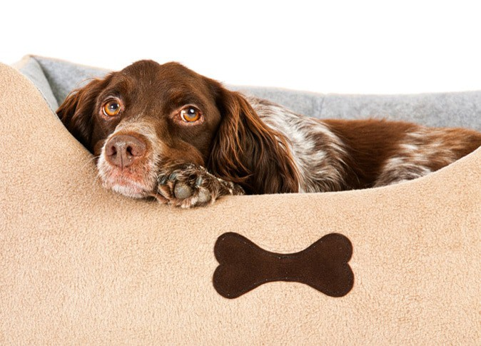 Hundebetreuung in familiärer Umgebung