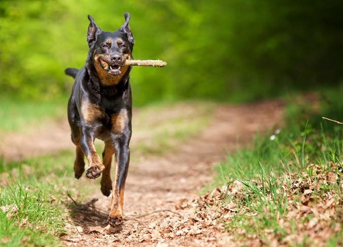 Gassi-Service Dogwalking