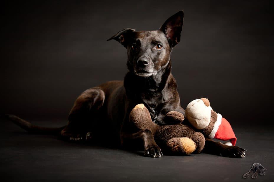 Geschenkgutschein für Hundehalter Köln Bonn Rhein-Sieg