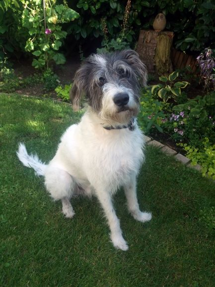 Beurteilung Hundetrainer Seidel