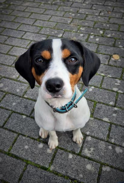 Kundenbewertungen  Hundetrainer Seidel